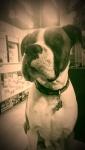 My name is Bosco :)