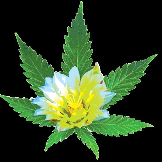 DesertBloom leaf posterized